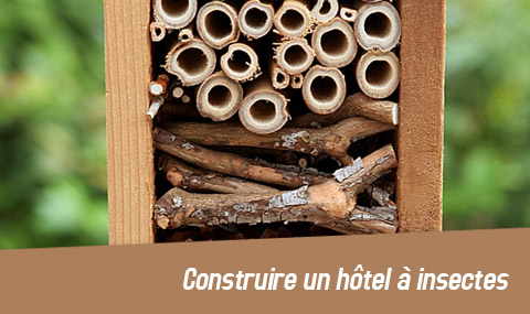 hotel-insectes